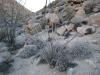 octello-cactus