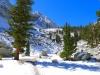 Lone Pine Campsite