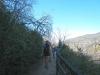 a-shady-trail