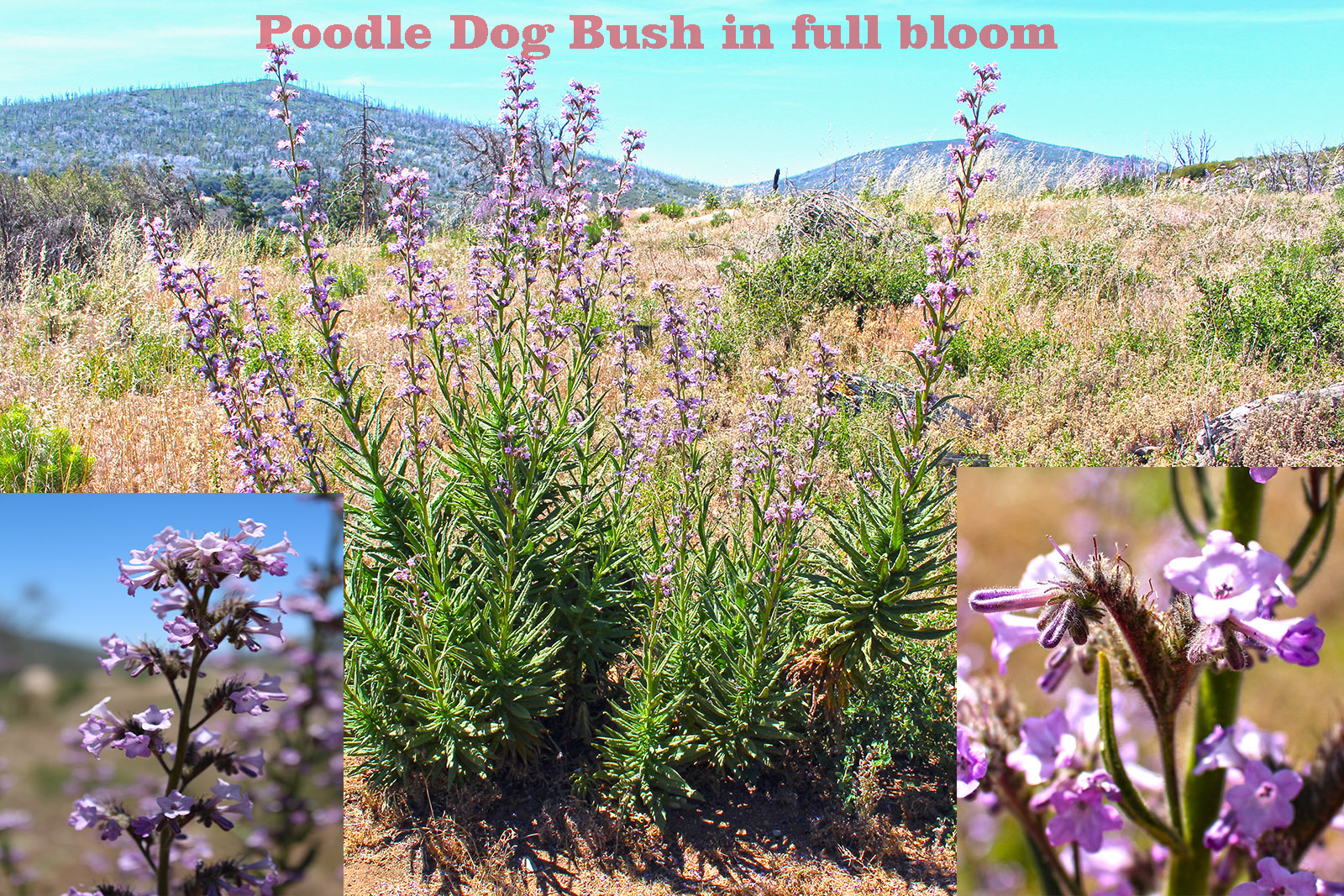 Keep An Eye Open For These Plants While On The Trail I